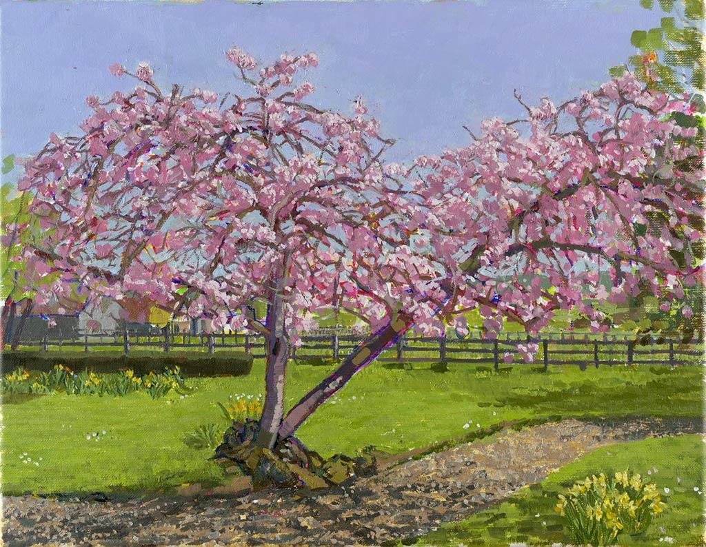 cherry-blossom35x45-5cm-1