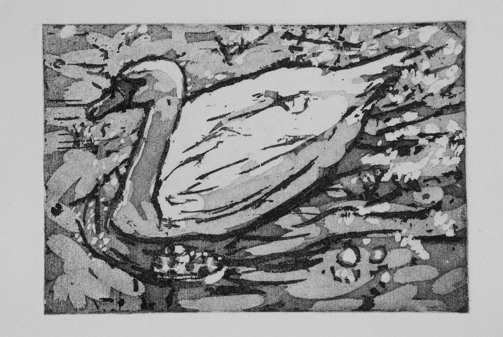 Avon-swan-27x32-etching-2