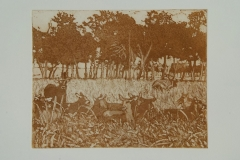 Waterbuck-lying-in-the-shade-Kenya-36x40-etching-1