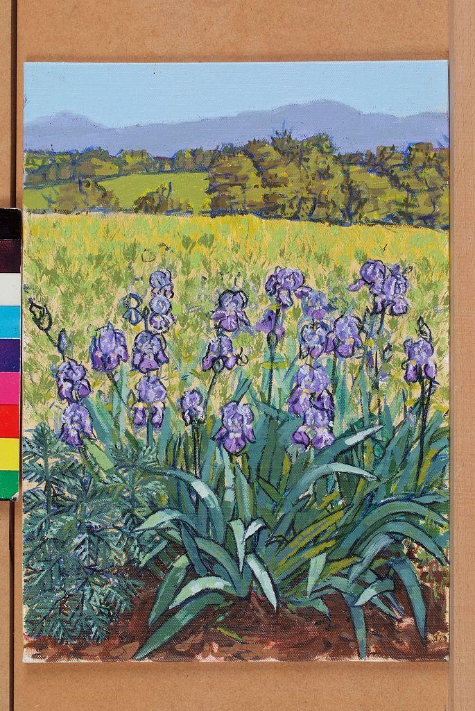 irises-in-italy