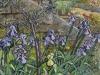 Irises with olive tree